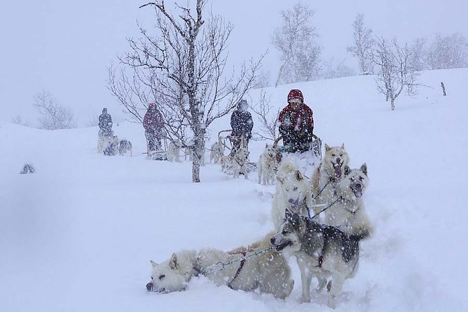 Exciting tour with children mushers